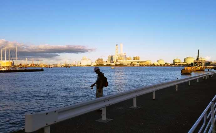 孫連れて岸壁サビキ釣りで夕涼み 25cm頭にサバ12尾の釣果に満足