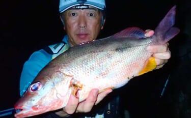 地磯からのカゴ釣りでアタリ連発 シブダイにタバメでクーラー満タン