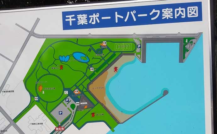 東京湾奥で美味なゲスト魚『ギマ』増殖中? ちょい投げ釣りでご対面