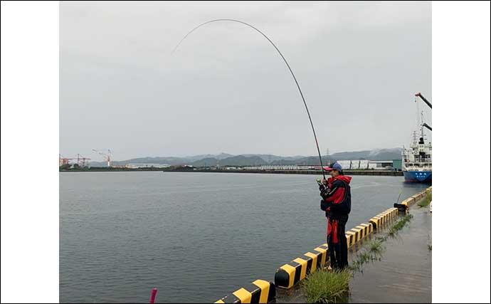 波止でのフカセチヌ釣りで本命2匹手中 「遊動式ガン玉」が奏功?