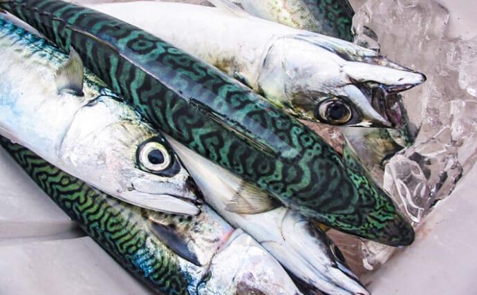 意外と知らない魚の「氷締め」&「酒締め」 仮死状態から蘇生は可能?