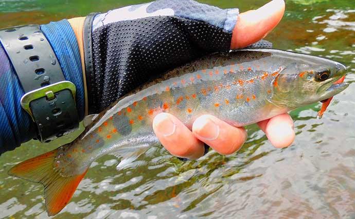 渓流釣りで美麗アマゴ快釣 安定釣果の3つのコツとは?【山梨・桂川】
