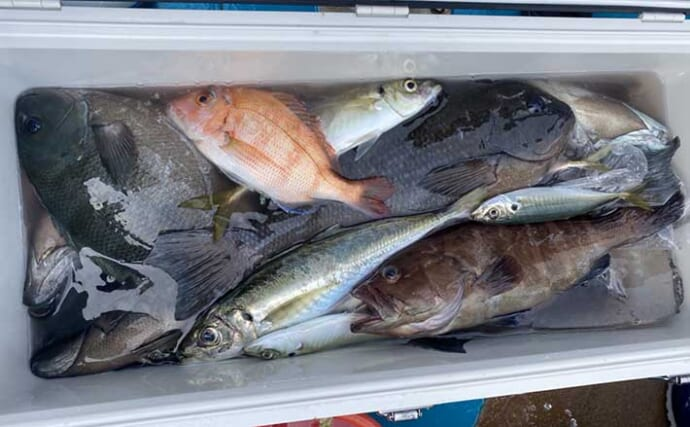 タイラバでグレ(メジナ)を釣る『グレラバ』成立 良型が連発【徳島】