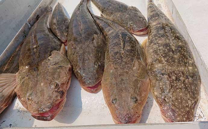 フラットフィッシュ釣り分け術 ヒラメは上向きでマゴチは前向き?