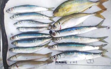 フカセクロダイ釣りで本命不発もウルメイワシが好土産【千葉・乙浜港】