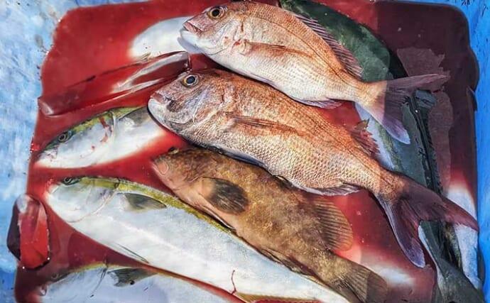 『かからし釣り』で良型アコウにハマチなど五目釣り堪能【兵庫・淡路島】