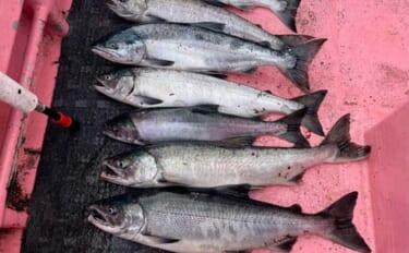 知床ウトロ発『アキアジ(鮭)釣り』満喫 カワハギ釣りファンにお勧め?