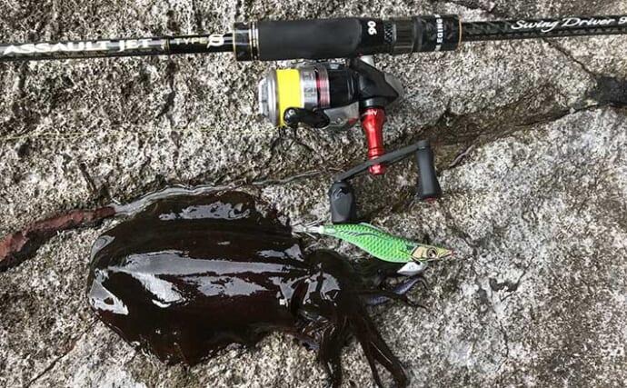 秋アオリ狙いの陸っぱりエギング入門解説:釣行タイミングと狙うポイント