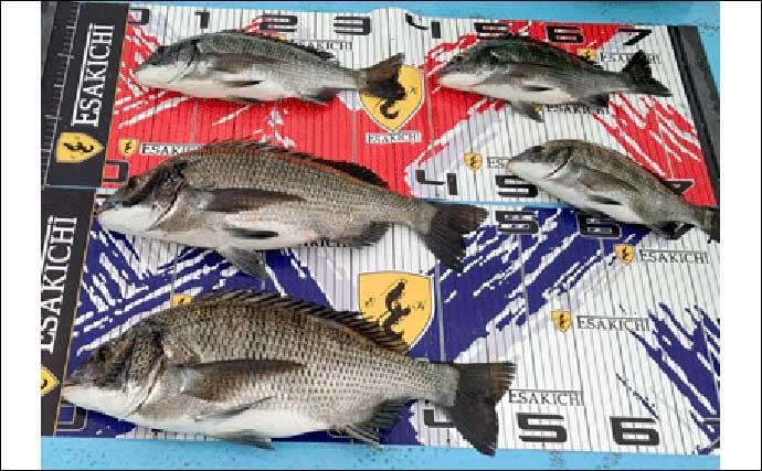 【愛知・三重】イカダ&海上釣堀最新釣果 カカリ釣りで62cm良型マダイ
