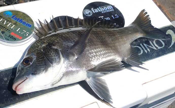 寄せエサ使用のクロダイ2大釣法『ウキダンゴ』と『フカセ』を徹底比較