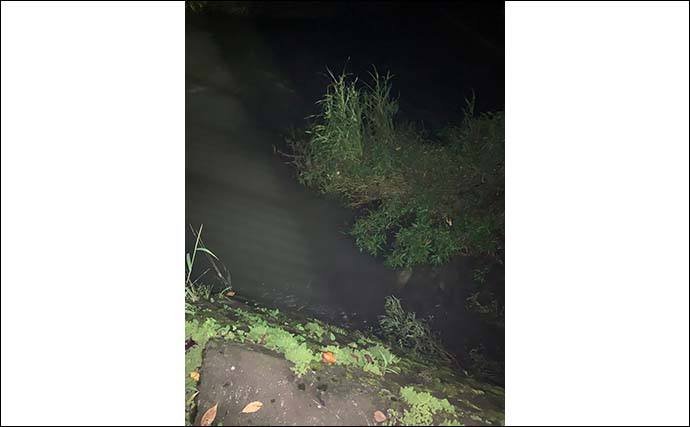 五条川で夜のナマズゲー 強い流れがブロックされた場所で好反応【愛知】