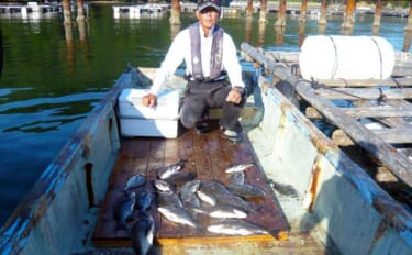 カカリ釣りで40cm頭にクロダイ22匹快釣 数釣り達成は濁りのおかげ?