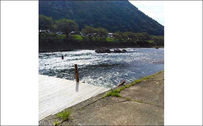 シーズン終盤の長良川郡上で「アユ友釣り」 23cm頭に33匹手中に満足