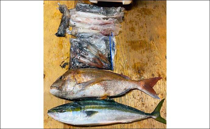 【福岡】夜焚きイカ最新釣果 日ムラあるもパラソル級含み好釣果継続