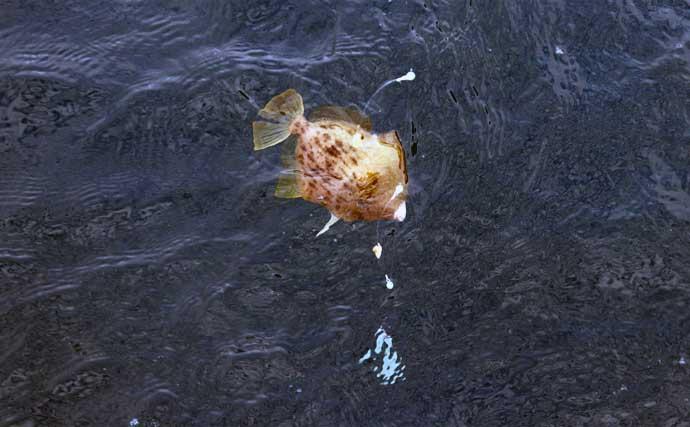 船カワハギ釣りの季節到来 タックル・仕掛け・キホンの釣り方