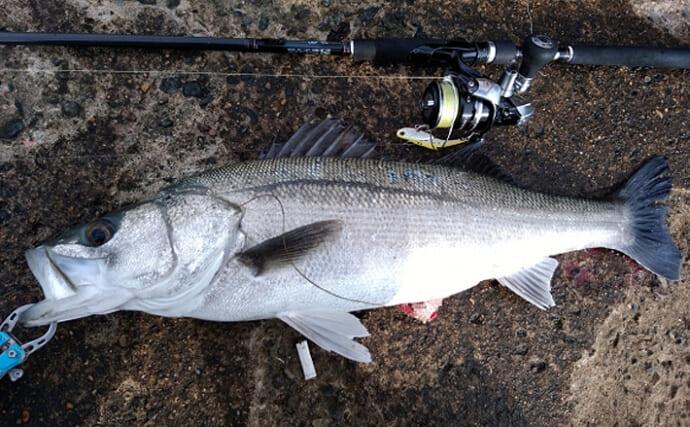 「海なし県」でスズキが釣れたワケ 川を100km遡るのも不思議ではない?