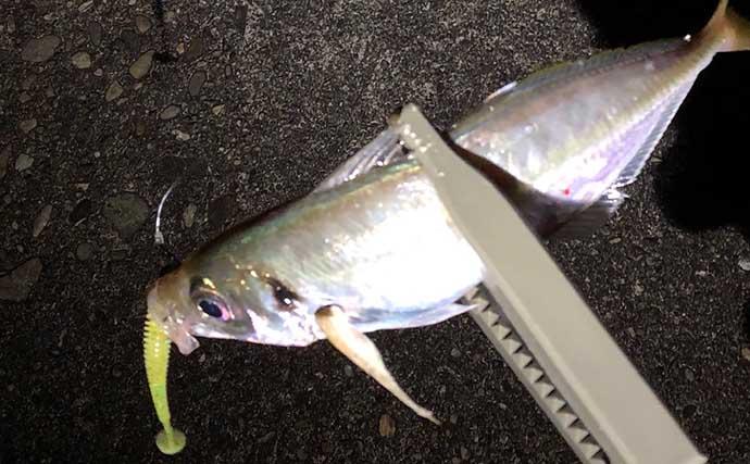 陸っぱりで『LTタチウオ』が流行中? 流用タックルや釣り方を解説