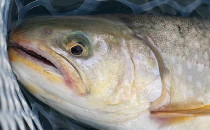 トラウト狙い『レイクジギング』入門解説 持続可能な釣りを目指すために