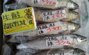 意外と知らない『茨城県の鮭』事情 実は太平洋側名産地の南限だった?