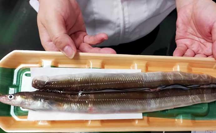 プロが教える「旬魚」の目利き:アナゴ グラマー体型は下半身が美味?