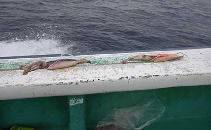 深海の大物『アブラボウズ』釣りで90kg級モンスター頭に船中11尾