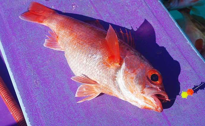アカムツ釣りで船中トップ釣果 ありそうでなかった専用鈎の効果とは?