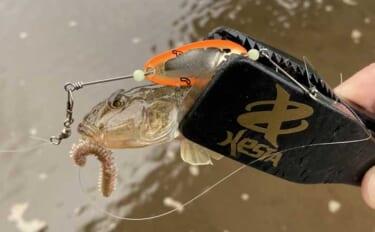 ハゼ釣り初体験の子供と楽しむ『ハゼスプーン』釣り 型よく今後に期待