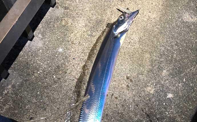陸っぱりからルアーでタチウオを釣る方法 何より大事なのは「レンジ」?