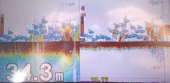 ボートからの「落とし込み釣り」で67cm頭にブリ族続々 魚礁狙いが的中