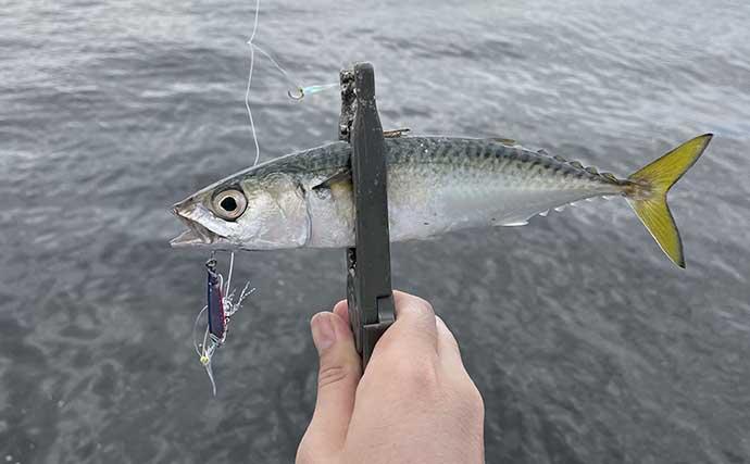 釣りにくい「日中の干潮時」でもサバゲームを満喫 10g前後のジグで連発
