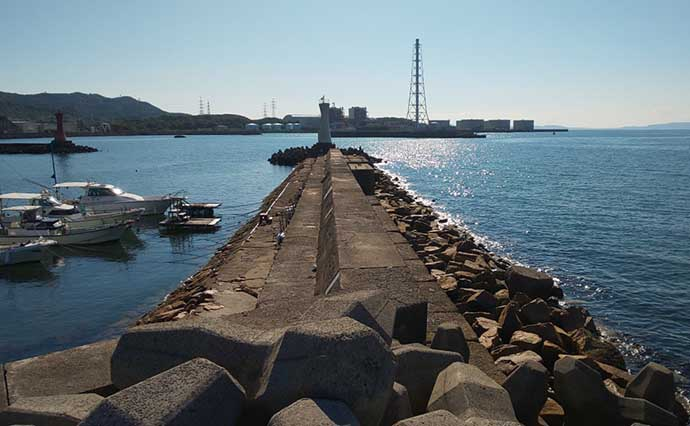 関西エリア「陸っぱりタチウオ」超入門:大阪湾おすすめ釣り場8選