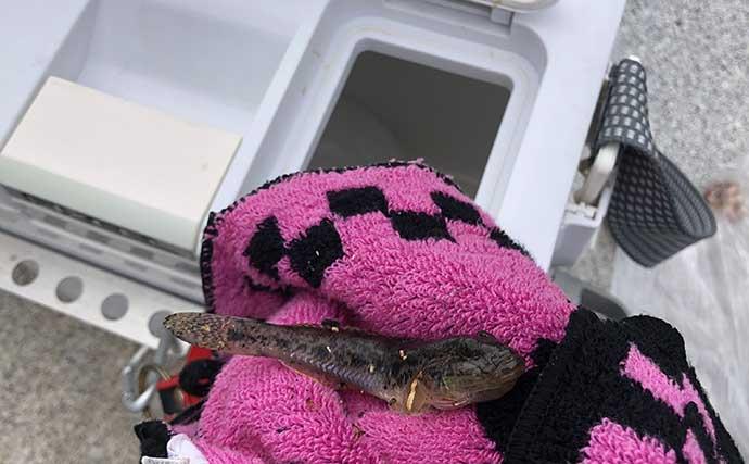 【釣魚レシピ】ハゼの天ぷら 子どもの魚嫌い解消のキッカケにも?