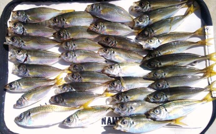 堤防サビキ釣りで10cm級アジが入れ食い 南蛮漬けに最適サイズか?