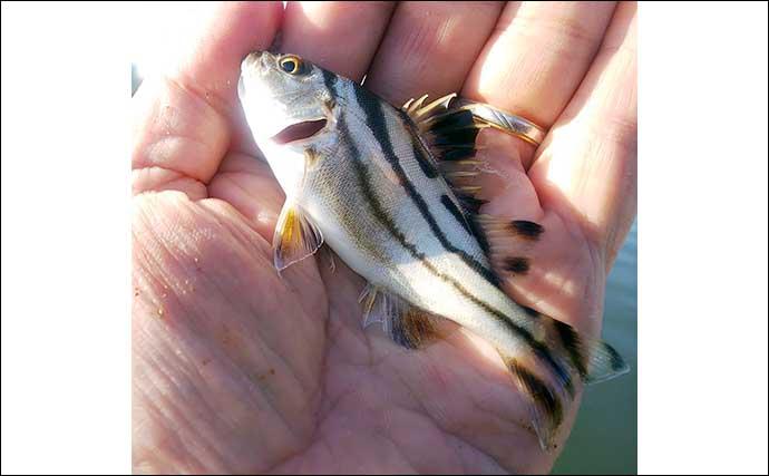 ハゼ狙いのミャク釣りで本命32尾手中 フグ対策が釣果伸ばす秘訣?