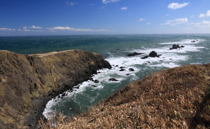 北海道のウニ&サケが赤潮で打撃 根本的な原因は地球規模の温暖化?