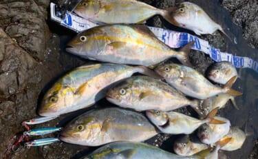 秋はショアジギング入門好機 刺激的な釣り味と基本の釣り方を解説