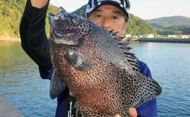 沖堤防での石物釣りで2kgイシガキダイ手中 ガンガゼの丸掛けにヒット