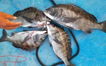 【愛知・三重】海釣り施設最新釣果 イカダ釣りで良型含めクロダイ活況
