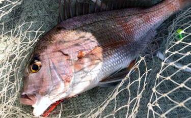 マダイ釣りのメッカ上越地方で楽しむタイラバゲーム 本命にワラサも浮上