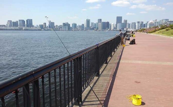 東京湾奥「サビキ釣り」最盛期到来 豊洲市場グルメと併せて楽しもう