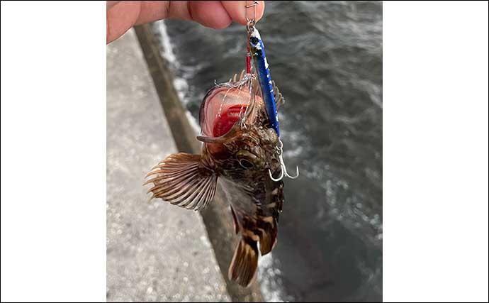 大阪南港にてタチウオゲーム 本命不発も『ワインド』釣法でサバ祭りに