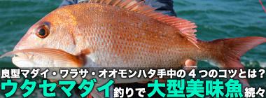 『ウタセマダイ』釣りで大型美味魚が続々 釣果アップの4つの近道とは?