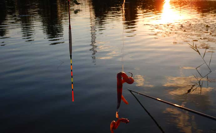淡水五目釣りでマブナにコイにカメ 練りエサと活きエサの比較も紹介