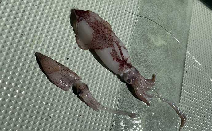 日本海で幻の魚『アラ』釣り堪能 船中トップは8尾と今期の好調を実感