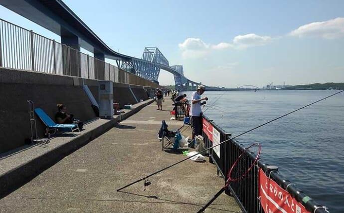 東京湾奥「サビキ釣り」トップシーズン到来 『オキアミだんご』で挑戦