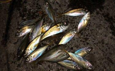 アジ釣りの時期はいつ?【季節・シーズン・時間帯を全国で比較】