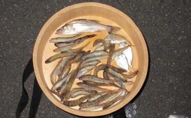 ハゼのミャク釣りステップアップ解説:PEライン使用時の食い込み改善術