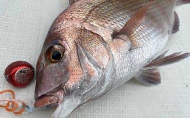 『上天草市釣りライター養成講座』を受講 釣りの腕前は不要だった?