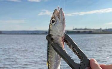 初心者の味方「ジグサビキ」のキホン:100均商品と釣具メーカー品を比較